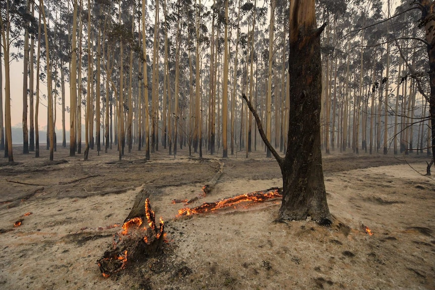 A log smoulders after a bushfire rushed through Yarloop